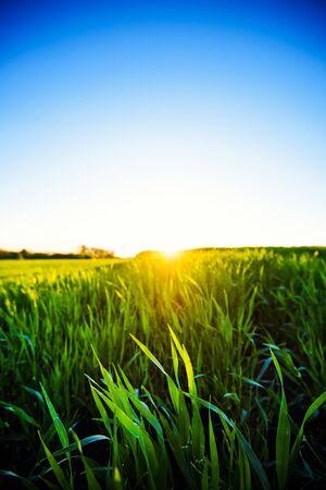 Green meadow under blue sky with clouds. Beautiful Nature Sunset Landscape. Foto de archivo