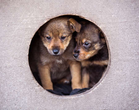 Little cute puppies in doghouse. 版權商用圖片