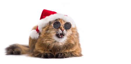 Christmas cat in red Santa Claus hat wearing sunglasses. Emotional cat.