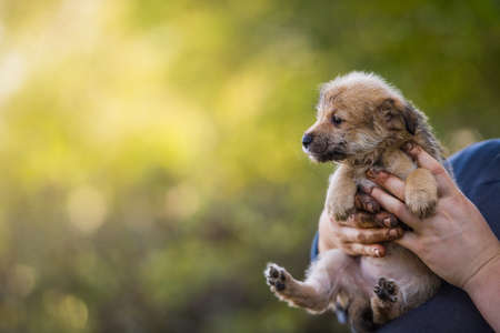 Puppy in the hands of a farmer. Rescue Animal. Homeless dog.