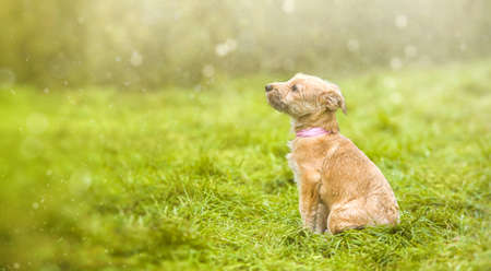 Puppy on green grass. Rescue Animal.A fairy tale picture. Homeless dog. 版權商用圖片