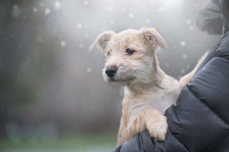 Puppy on a background with bokeh defocus. Rescue Animal.A fairy tale picture. Homeless dog.