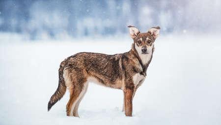 Portrait of dog in snow in winter