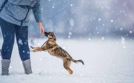 woman and her dog in a snowy day 版權商用圖片