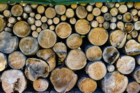 piled: Piled up tree trunks in different sizes Stock Photo