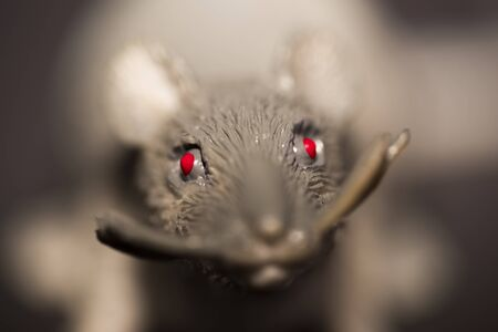 red eyes: Spooky rodent with glowing red eyes looking at the camera