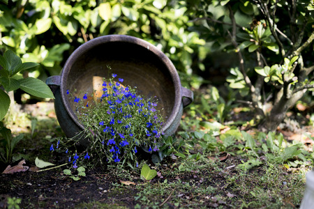 tipped: Small purple flowers in a tipped over flower pot on the ground