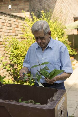 composting: Senior man working in his backyard cutting up plants he has pruned in the garden and placing them in a composting bin