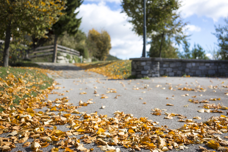 changing seasons: Scattered colorful autumn leaves lying on the asphalt on a rural road depicting the changing weather and seasons