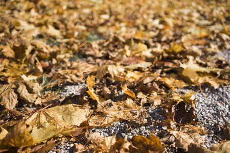 ciclos: Cierre de vista de bajo ángulo de marrón otoño hojas en descomposición en el asfalto que simboliza el ciclo de vida en la naturaleza y el cambio de estación