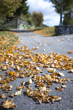 changing seasons: Dried brown autumn leaves lying scattered on the asphalt at the side of a rural road in a concept of changing seasons, low angle view