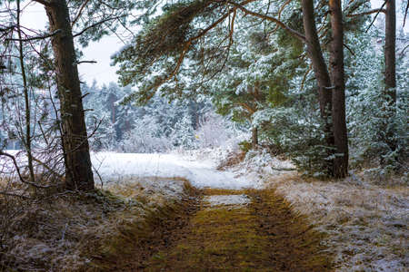 timberland: Deserted path through a snowy forest leading towards a snow covered winter field Stock Photo