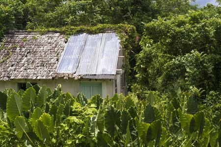 damaged roof: Old dilapidated hut or shed with a damaged roof and sheets of galvanised zinc covering the damage in a leafy lush green tropical garden