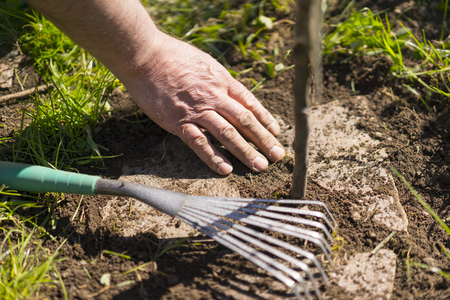 tiling: High Angle Close Up of Person Gardening - Working the Dirt with Hands and Rearranging Stones in Garden with Small Rake Stock Photo