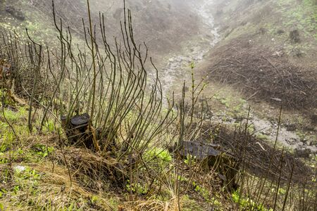 obscured: High Angle Scenic View of Small Creek Winding Through Hilly Valley and Obscured by Strange Plants and Fog