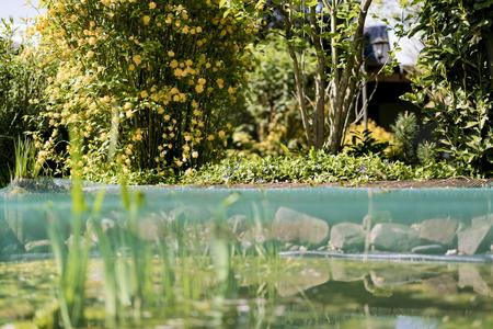 Ein üppiger, grün blühender Garten und Teich mit Wasser mit Lily Pad und Schilf. Standard-Bild