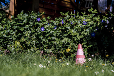 Traffic cone in a garden standing in long grass against a flowering shrub with blue flowers viewed low angle Standard-Bild
