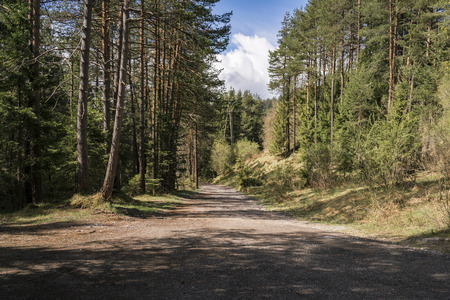 Deserted forestry road leading through a pine plantation or forest on a sunny cloudy day with shadows cast by the trees in a nature concept