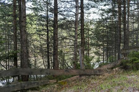 Überreste einer alten gebrochenen rustikalen hölzernen Planke und des Pfostenzauns in einem Kiefernwald in einer ländlichen Landschaft