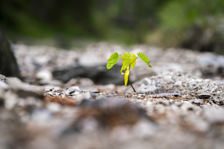 Small single green seedling growing in soil