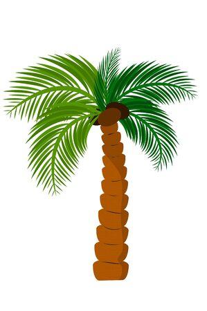 fruit stem: coco Illustration