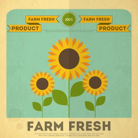 market gardening: Farm Organic Food Poster. Retro Placard with Sunflowers. Vector Illustration.
