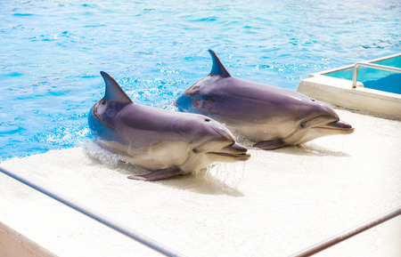 bottle nose: couple of bottle nose dolphins in Attica Zoo