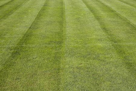 green soccer pitch