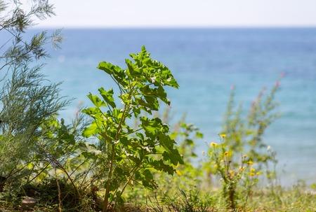 closeup grass and plant against sea shore Imagens