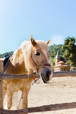 Pony with a hair. Funny pony on a farm. Pony portrait