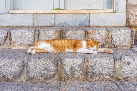 A cat relaxing on stone steps in Hydra. Stray cats in greek island, Greece