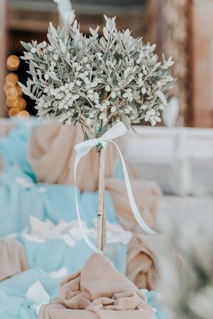 Small olive tree is decoration on greek wedding, Greece Stock Photo