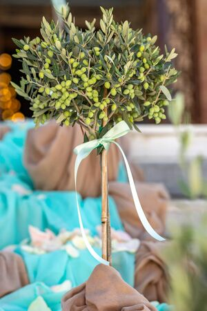 Small olive tree, Greece Stock Photo