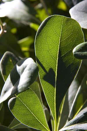 hojas: plant leaves contrast