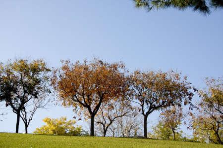hojas: Fall seasons trees