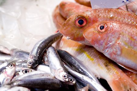 pescados: Fresh fish Stock Photo