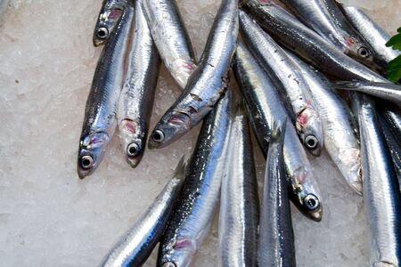 pescados: Sardines