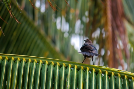 Angry bird on a palm tree branch photo