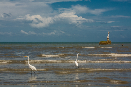 Herons and pelicans catching fish on the shore in Livingston Guatemala photo