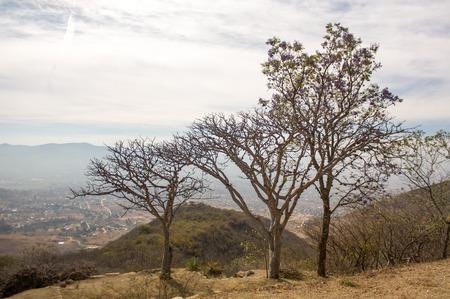 oaxaca: Monte Alban Oaxaca small trees above Oaxaca valley Stock Photo