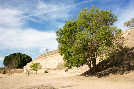 oaxaca: Monte Alban Oaxaca tree next to pyramid
