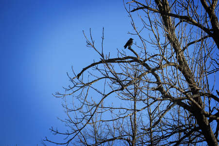 A bird resting on bare branches.