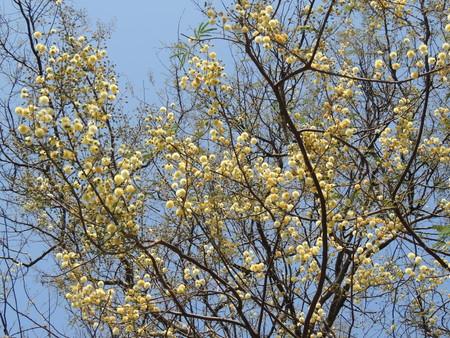 Tree with small yellow flowers stock photo picture and royalty free stock photo tree with small yellow flowers mightylinksfo