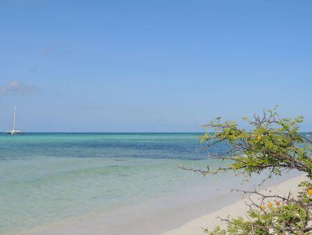 thorny: thorny bush caribbean beach