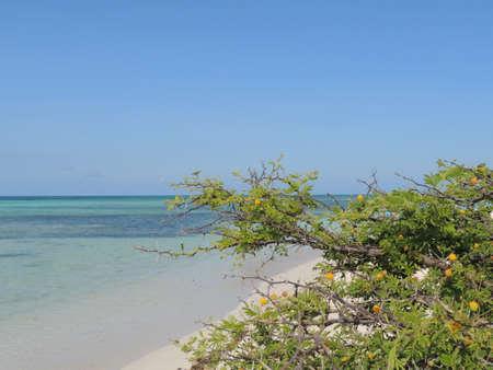 thorny bush in desert beach