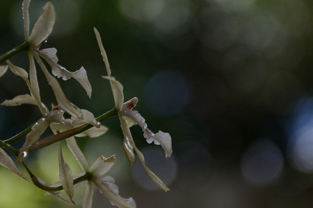 backlight of a wild orchid with dew drops of the early morning