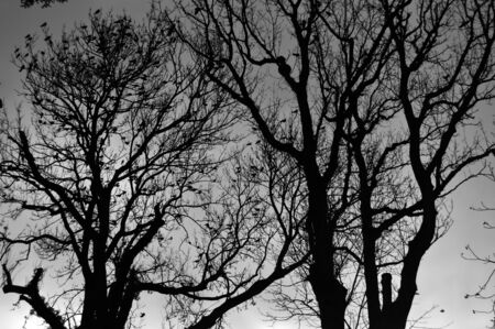 Sad winter trees in black and white style in a cemetery in Transilvania taken at all saints day