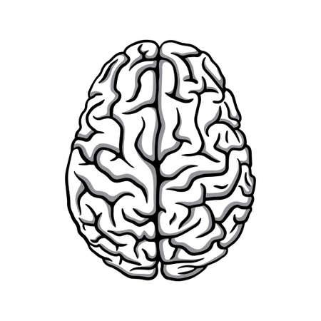 Black & white human brain illustration