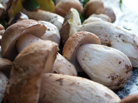 edulis: A close-up of a number of freshly picked ceps or boletus edulis mushrooms