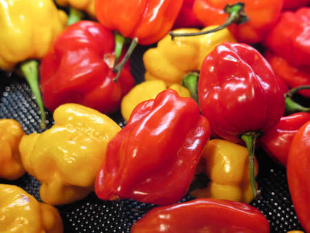 bonnet: Red and yellow hot scotch bonnet or habanero spicy chili peppers